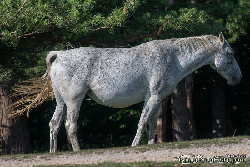 Finely spotted horse
