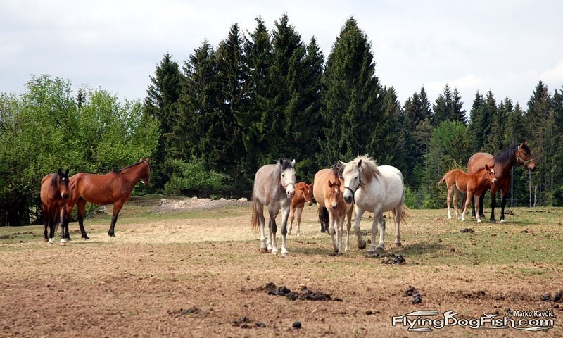A colorful herd of horses