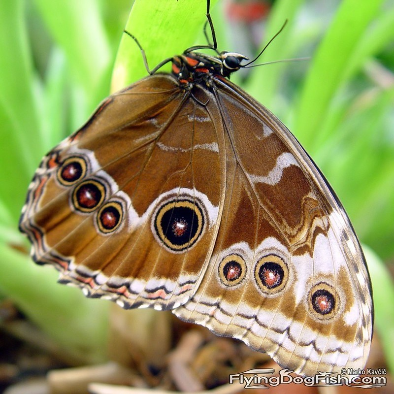 An exotic butterfly