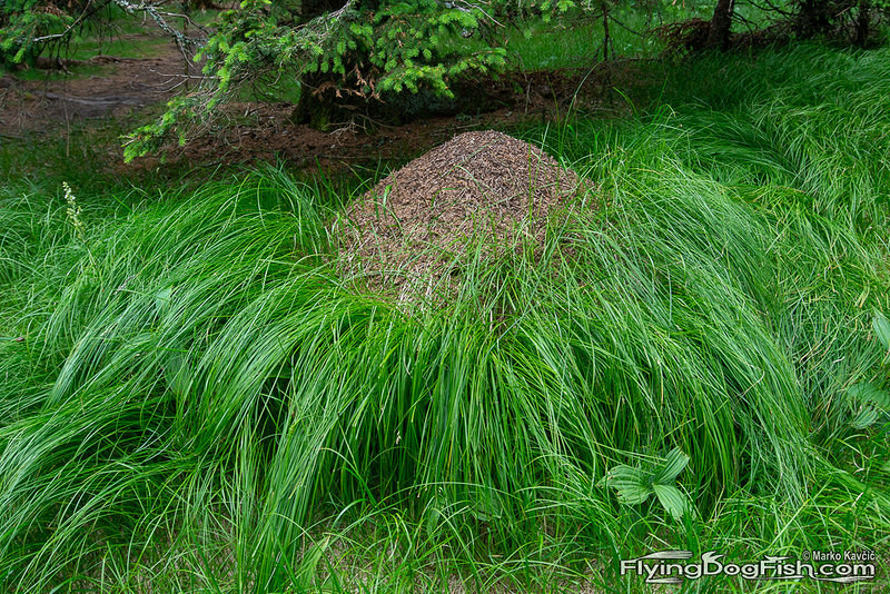Anthill in grass