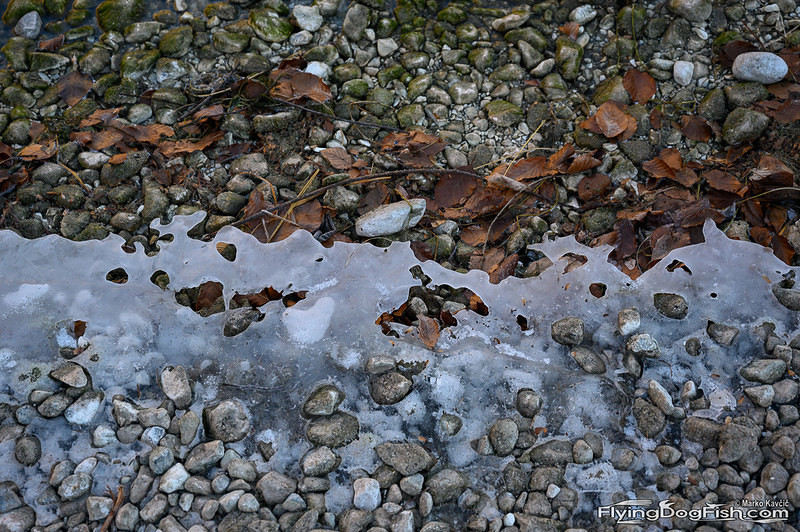 Ice crust on the shore
