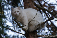 Fluffy cat sitting in a tree