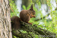 Squirell eating on a tree